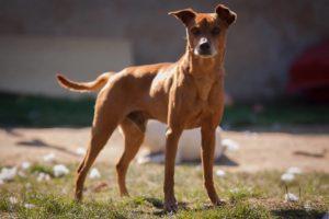 Štefánek – adoptovaný