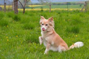 Mášenka – adoptovaná
