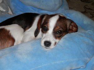 Molly – adoptovaná