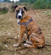 Ronny – adoptovaný