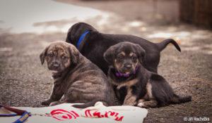 Buchťáčci – adoptovaní