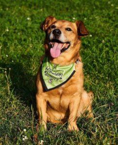 Bony – adoptovaný