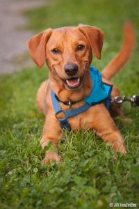 Bak – adoptovaný
