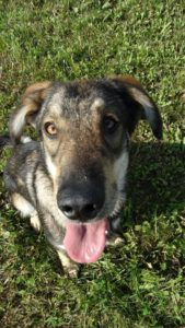 Hugo – adoptovaný