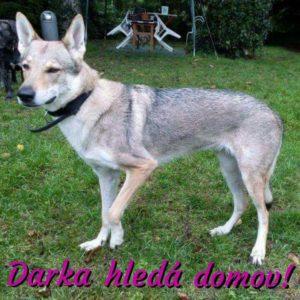 Darka – adoptovaná