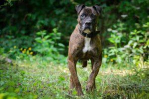 Arna – adoptovaná