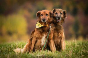 Ferda a Pepa – adoptovaní
