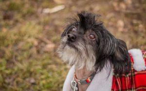Líza – adoptovaná