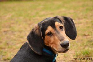 Bastien – adoptovaný