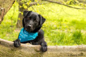 Dag – adoptovaný