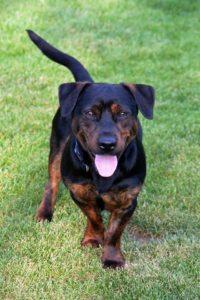 Maxík – adoptovaný