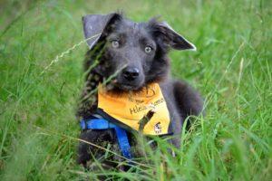 Boby – adoptovaný