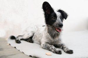 Bobinka – adoptovaná