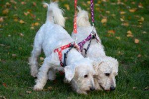 Chip & Dale – adoptovaní