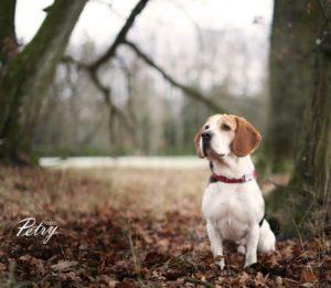 Sebby – adoptovaný