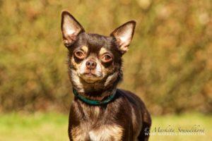 Dakota – adoptovaná