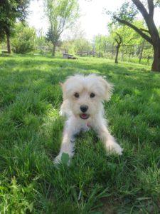 Sofie – adoptovaná