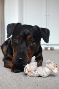 Merlin – adoptovaný