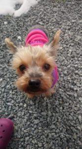 Nellie – adoptovaná