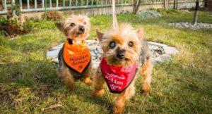Hanička  a Olinka – adoptované