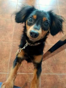 Šťovík (Viki) – adoptovaná
