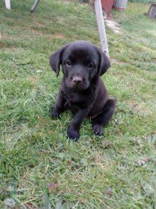Irisa – adoptovaná