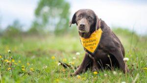 Daisy – hledá trvalou dočasnou péči