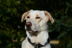 Barney – adoptovaný