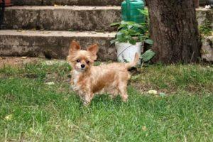Berylka – adoptovaná
