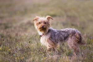 Šiva – adoptovaná