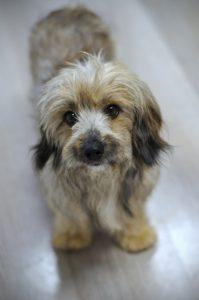 Muf – adoptovaný