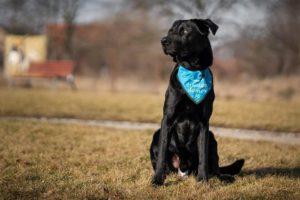 Argo – adoptovaný