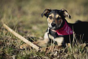 Ajša – adoptovaná