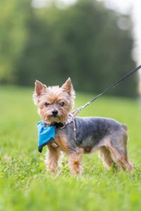 Čikyta – adoptovaná