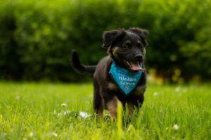 Viktor – adoptovaný
