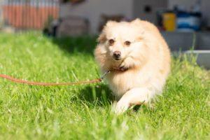 Sasie – adoptovaná