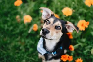 Tobík – adoptovaný