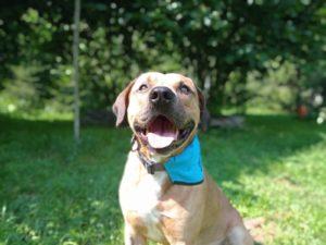 Marley – adoptovaný