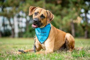 Scooby – adoptovaný