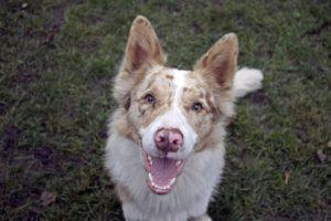 Leeway – adoptovaný