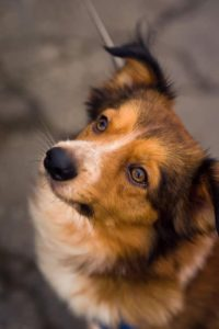 Jack – adoptovaný