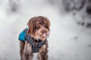 Sebastian – adoptovaný