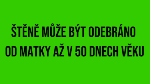 plain-green-background (3)