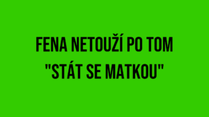 """FENA NETOUŽÍ POTOM """"STÁT SE MATKOU"""""""