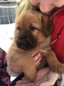 Medvídek – adoptovaný