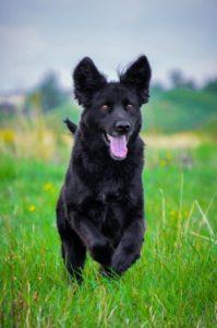 Claude – adoptovaný