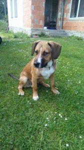 Rex štěně – adoptovaný