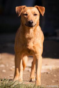 Bora – adoptovaná