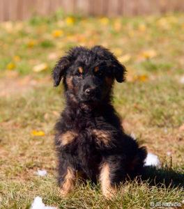 Rocky – adoptovaný