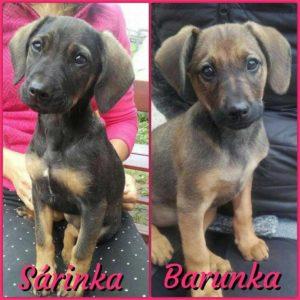 Sára a Barunka – adoptované
